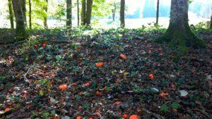 Waldboden2